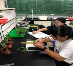 原民生研究紫膠蟲  展現生物科學才能