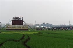 斗南「白爛貓」彩繪稻田吸引2萬人看  收割前還可看