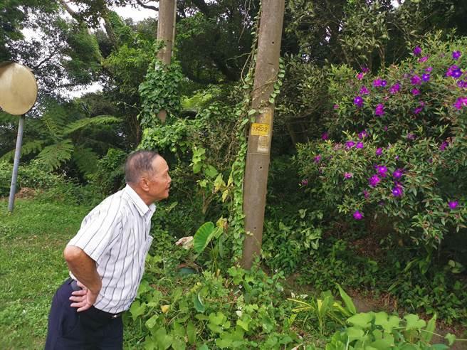 雲洞山莊的老主人湯雲珍指著電線桿後方土地才是國有土地範圍,他們並未占用。〔謝明俊攝〕