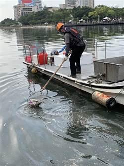 愛河出現大量死魚 環保局排除廢水偷排