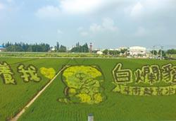 白爛貓彩繪稻田 吸引2萬人