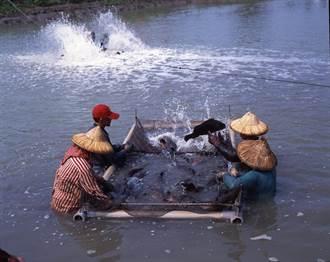 中油循環升級出奇招,冷排水再利用,鑽石水養殖高經濟魚類