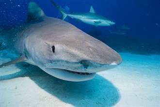 童捕獲怪物級巨鯊 專家驚:破紀錄