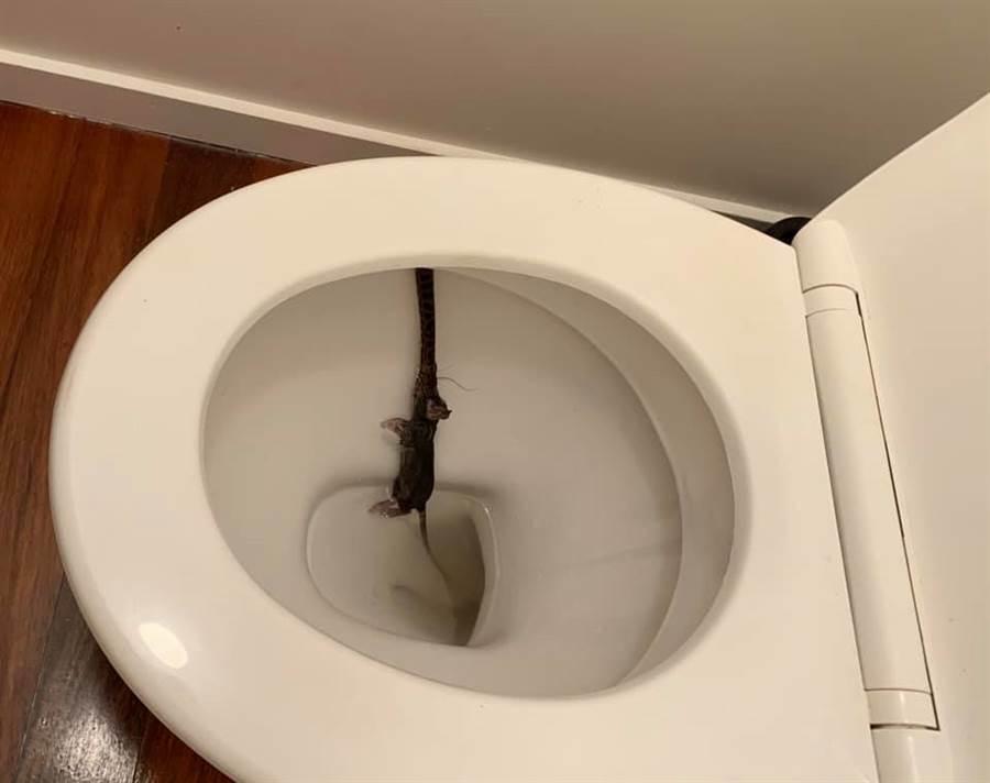 一名女子早起上廁所時,被馬桶裡的駭人畫面嚇呆。(摘自臉書)