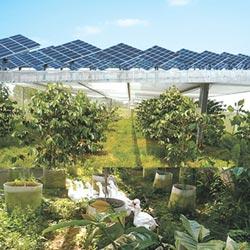太陽光 推農漁牧光電共構解決方案