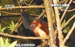 雲南新發現高黎貢比氏鼯鼠
