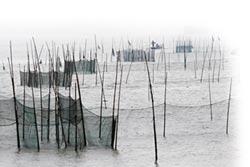 防濫捕護生態 長江十年禁漁