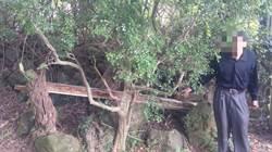 陽明山草山行館樑柱遭竊  附近鄰居拿珍貴林木裝修自宅