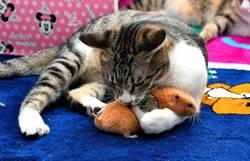 顛覆千年世仇!貓抱緊老鼠 畫面曝光超療癒