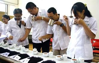 魚池鄉農會地方特色茶 日月潭紅茶競賽展開為期4天評鑑