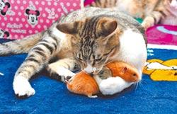 貓鼠相擁而眠 畫面太療癒了