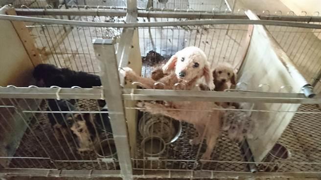 雲林縣動植物防疫所和北港警分局在北港查獲非法貓犬繁殖場,沒入200多隻貓犬。(雲林縣動植物防疫所提供/許素惠雲林傳真)