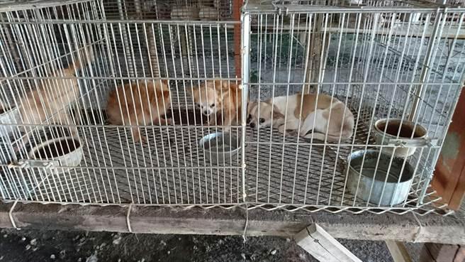 雲林縣動植物防疫所和北港警分局在北港查獲非法貓犬繁殖場,全都是名貴品種。(雲林縣動植物防疫所提供/許素惠雲林傳真)