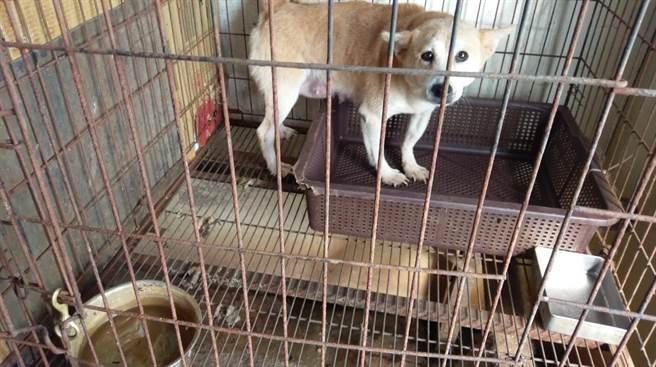 雲林縣動植物防疫所和北港警分局在北港查獲非法貓犬繁殖場,場內寵物很可愛。(雲林縣動植物防疫所提供/許素惠雲林傳真)
