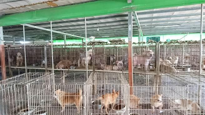 雲林縣動植物防疫所在北港鎮破獲大型非法犬貓繁殖場,226隻沒入開放認養。(雲林縣動植物防疫所提供)