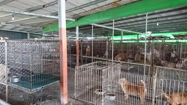 北港鎮好收里的非法貓狗寵物繁殖場環境髒亂。(雲林縣動植物防疫所提供)