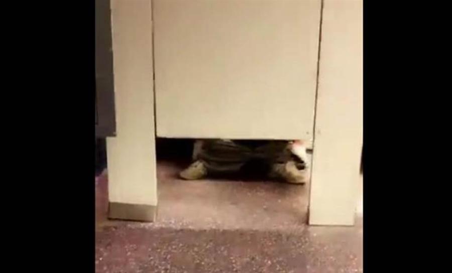 未成年小情侶在百貨公司男廁偷嘗禁果,少女月經沒來,少年吃官司。(非事發示意圖/ 翻攝自推特Ryan Clyne)