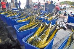 鬼頭刀豐收 漁會推廣加工品