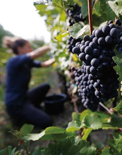 法國禁噴農藥爭議