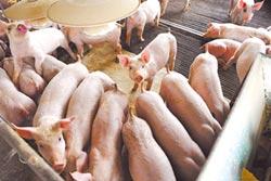 豬瘟補助經費 陸投入10億人幣