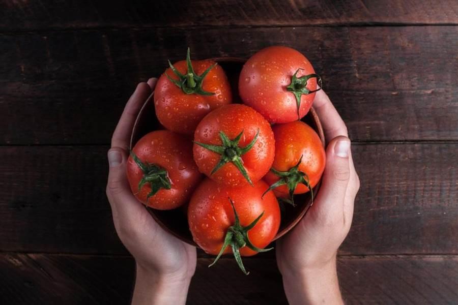 專家指出,成熟的番茄鞣酸含量並不高,也不會和高蛋白食物產生副作用。(達志影像/shutterstock)