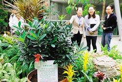 50餘種世園會珍稀植物安家