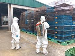 八德首例禽流感 銷毀1450土雞