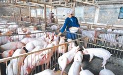 陸砸3億人幣 補助養豬業量產