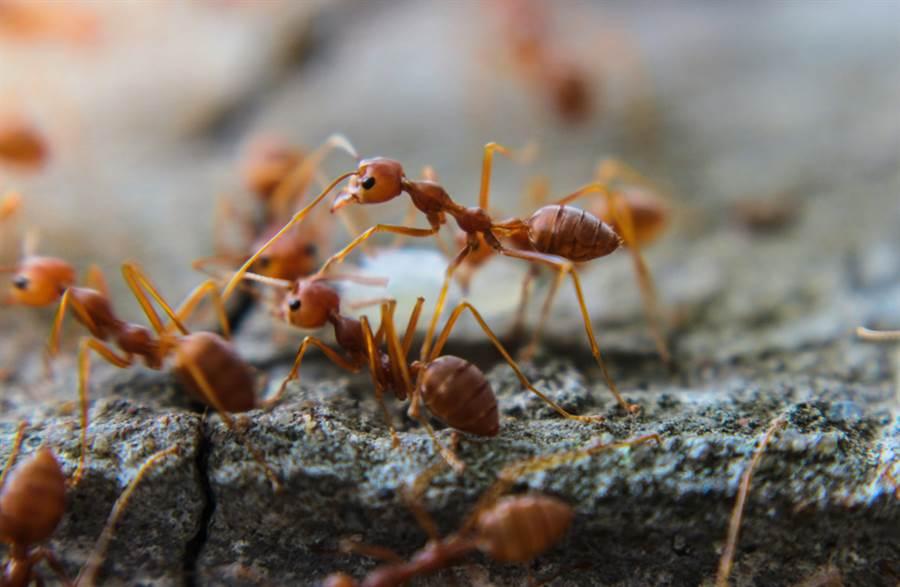 為何冬天看嘸螞蟻?網曝驚人真相(圖/達志影像)