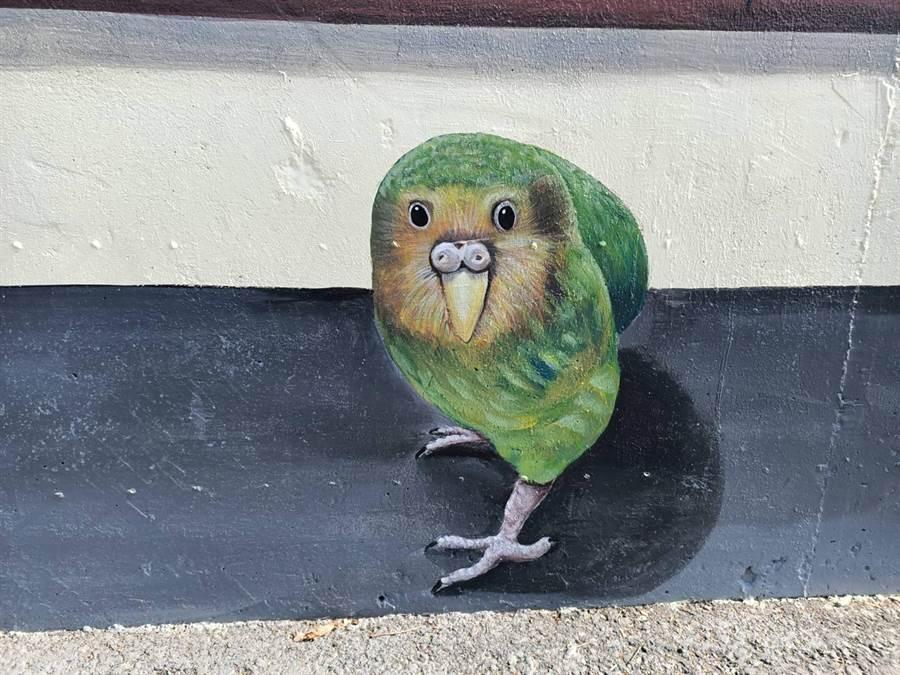 他們還挑選了許多稀有種鸚鵡照片,這隻為紐西蘭特有鳥類鴞鸚鵡。(張毓翎攝)