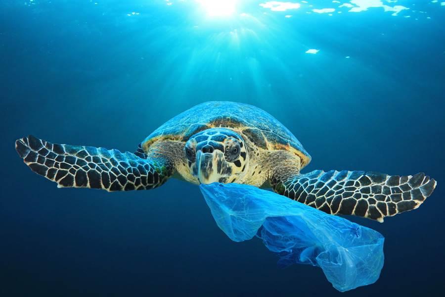 全球塑膠污染嚴重,海龜咬垃圾的示意圖。(圖/摘自shutterstock)