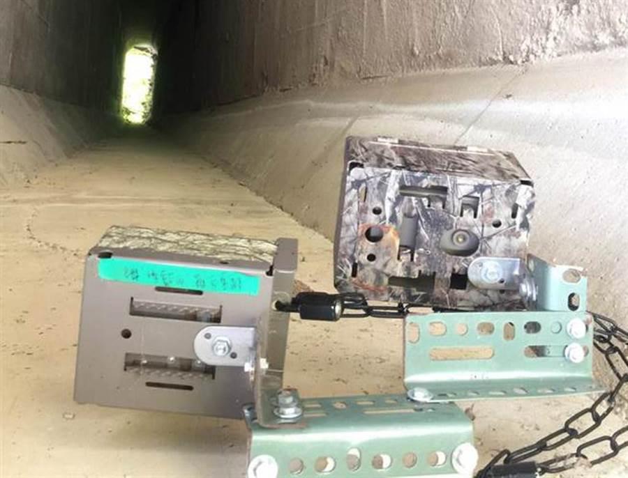 苗栗縣政府於苗29線設置紅外線自動照相機,監測石虎蹤影。(苗栗縣政府農業處提供/何冠嫻苗栗傳真)
