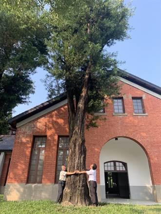 山上花園水道博物館 百年羅漢松價值上億日圓