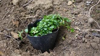 校園諾亞方舟計畫 蔡適應支持永續生態扎根校園