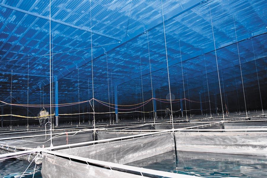 4月26日,高海拔宇宙線觀測站水切倫科夫探測器陣列一號水池內景。(新華社)
