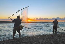 保育日本禿頭鯊魚 台東祭禁捕令