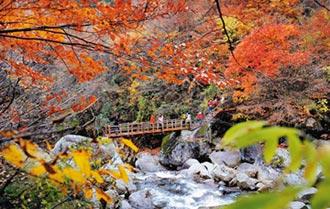 陸秋色楓情萬種 帶動紅葉經濟