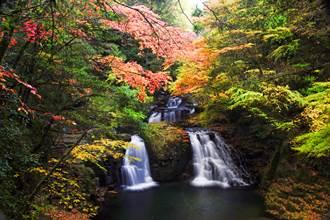 秋遊日本三重賞楓趣!瀑布前看金黃紅交錯 泡湯品和牛