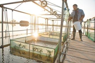 引陽澄湖水 在池塘養蟹