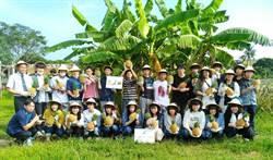 「日本高中生」到高雄鳳梨田體驗一日農夫生活