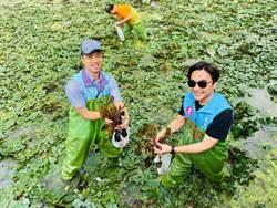 高市仁武區公所舉辦一日菱農生活 遊客重溫採收盛況