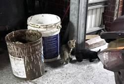 台東知名麵店摔貓 今休息一天
