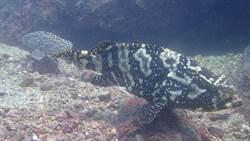 海科館保育行動開跑!強勢清除外來種魚類
