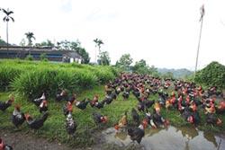 人道飼養讓動物吃好住好 提升畜產品品質