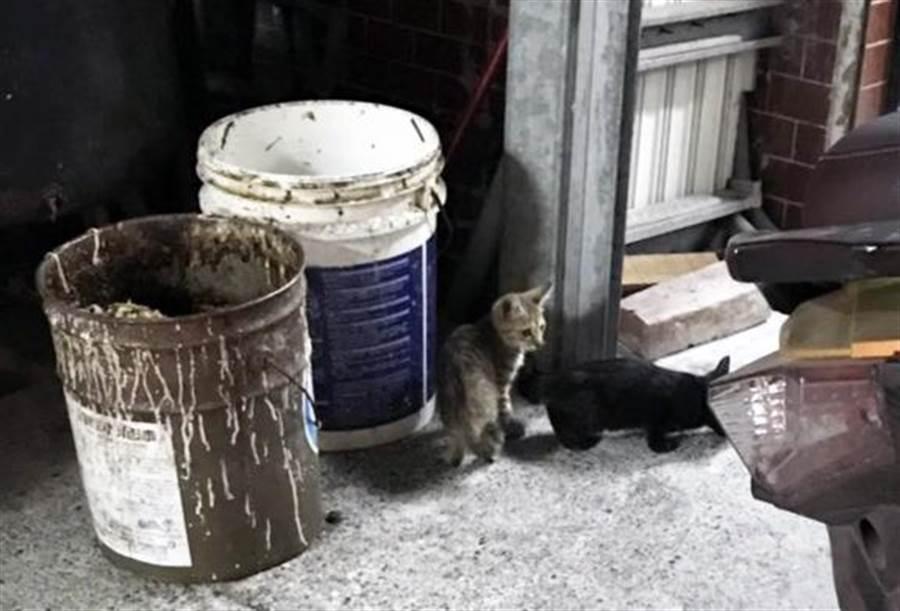 台東發生疑似摔貓事件,小黑貓生前身影曝光。(網友崔崔提供/莊哲權台東傳真)