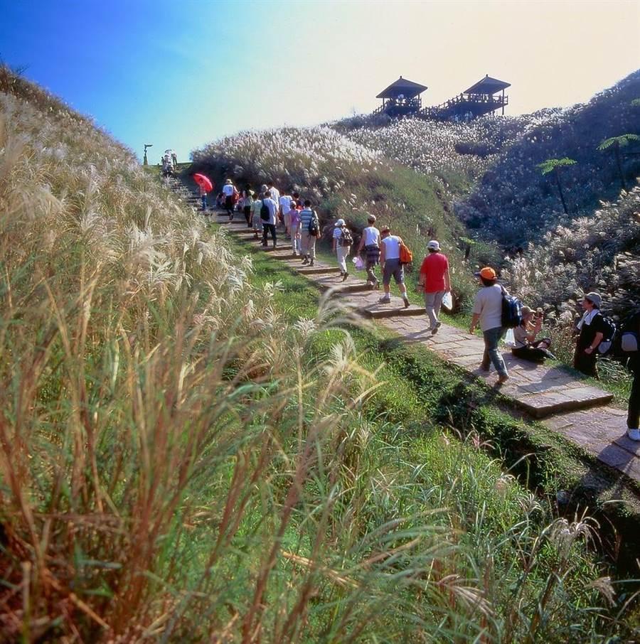 新北市貢寮區的草嶺古道的芒花季即將在11月9日開跑,歡迎遊客登山健行,體驗東北角豐富的自然生態與人文風情。(東北角風景管理處提供/吳康瑋基隆傳真)