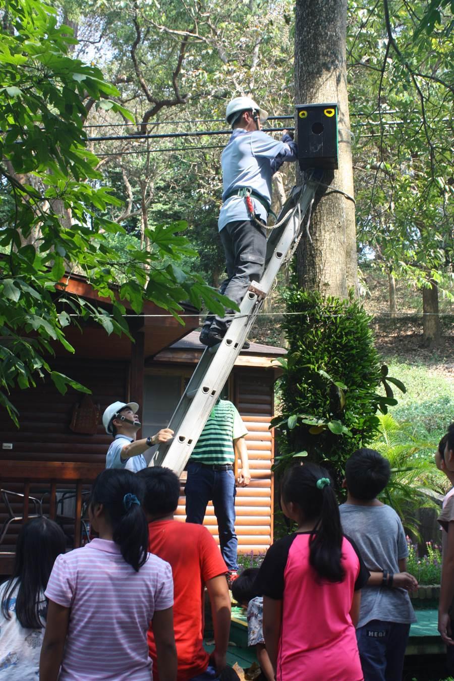 工作人員將角鴞巢箱固定在樹幹上。(台糖尖山埤江南渡假村提供/莊曜聰台南傳真)