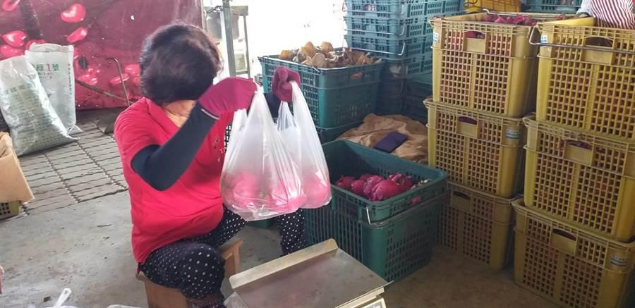 由台南區農業改良場,農糧署南區分署及台南市府農業局舉辦的「食尚有機豐收樂活動」,將於11月2日在柳營太康有機蔬果農業專區登場。(翻攝照片/莊曜聰台南傳真)