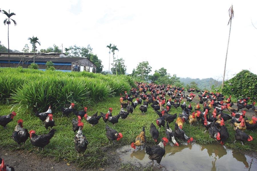 人道飼養放牧需要廣大土地成本。圖/陳至雄