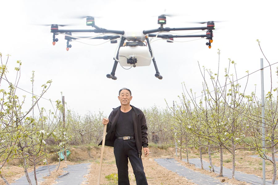 山西臨汾吉縣,一名果農觀察大疆無人機植保作業。(中新社資料照片)